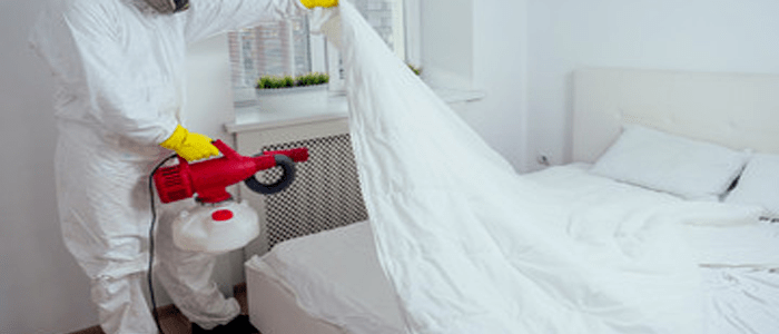 Reliable Bed Bug Removal Service